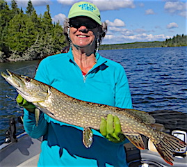 Lots of BIG Northern Pike Fishing at Fireside Lodge by Lois Echert